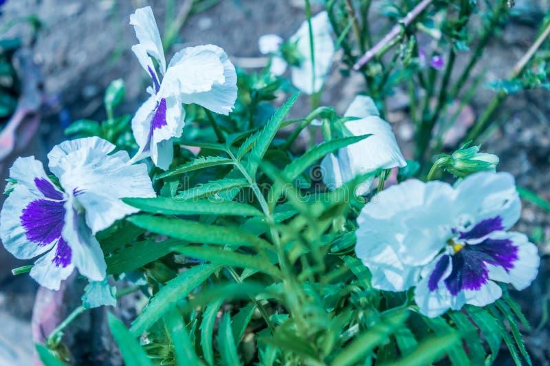 白花和绿色叶子在庭院里 库存照片
