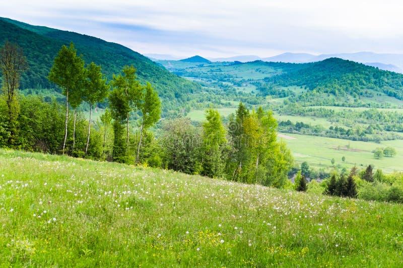 白花和蓝色山的领域 免版税库存照片