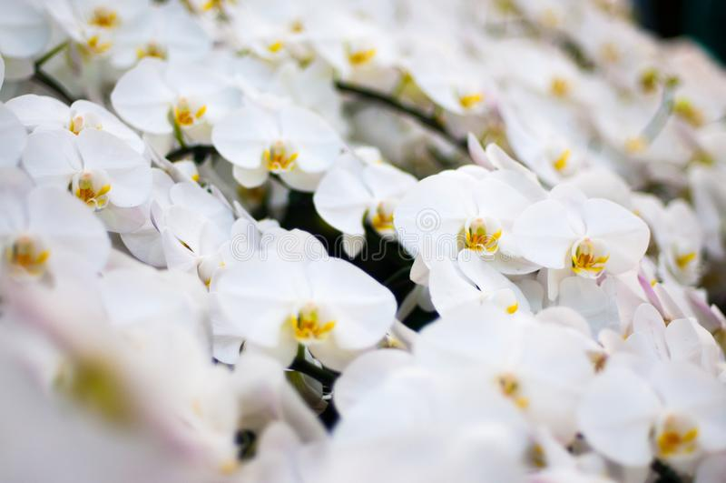 白花和黄色花粉 免版税库存图片