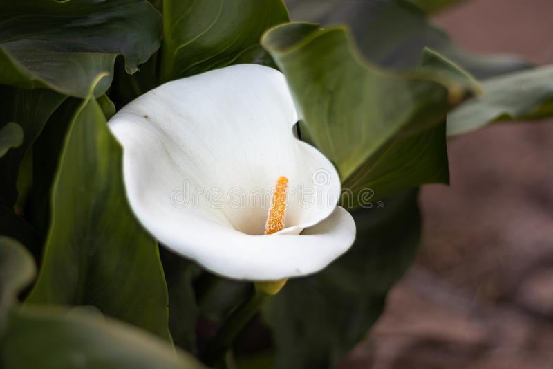 白花唯一隔绝与细节纹理 图库摄影