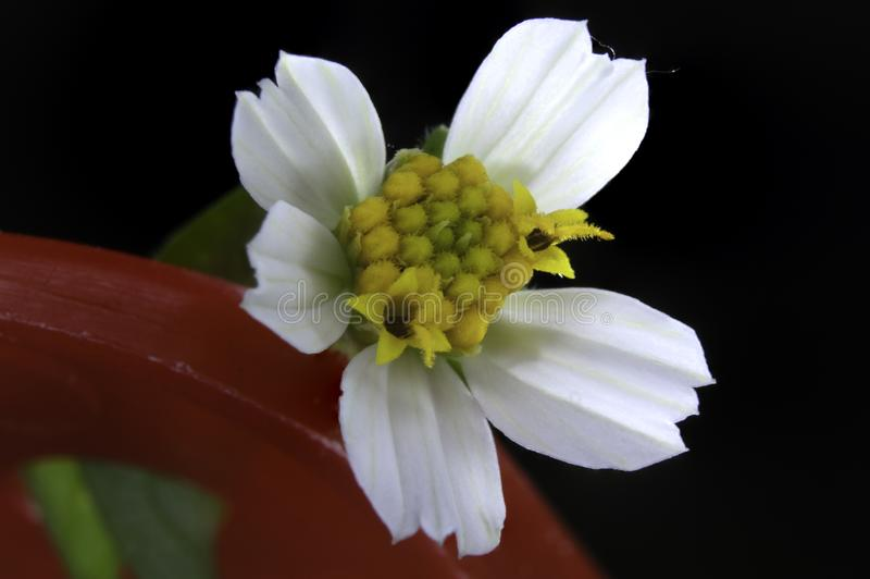 白花在佛罗里达 图库摄影