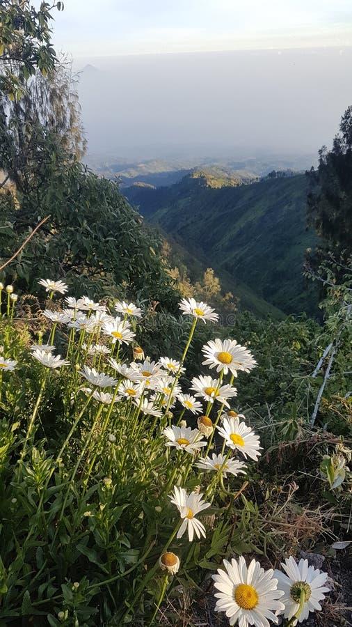白花在小山顶部 免版税库存图片