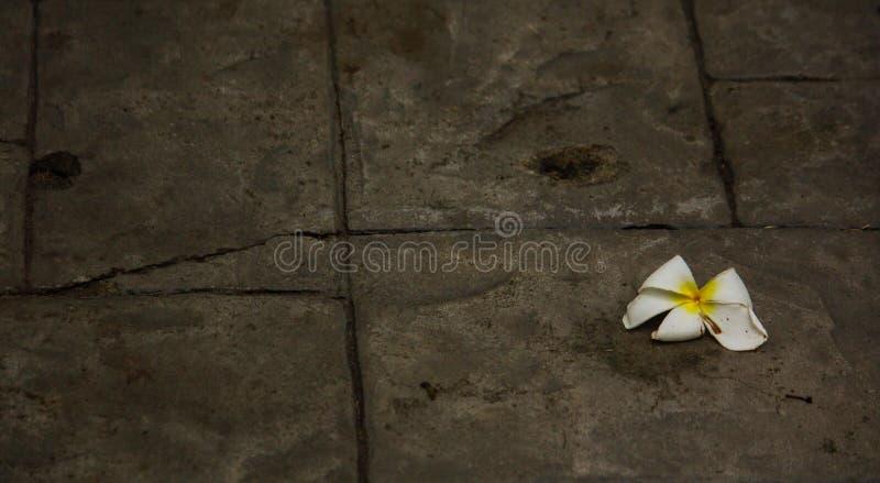 白花有棕色背景 免版税库存照片