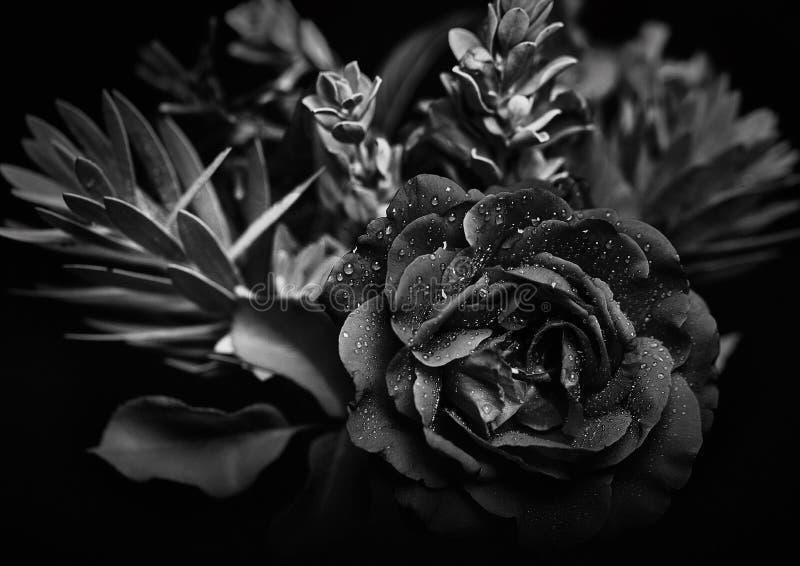 黑白花束演播室背景射击 图库摄影