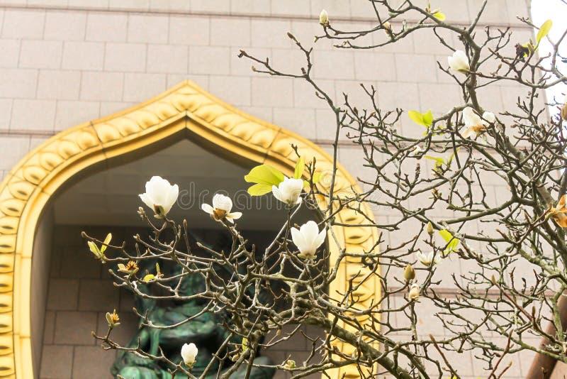 白花特写镜头在钟Tai陈修道院在台湾 免版税图库摄影