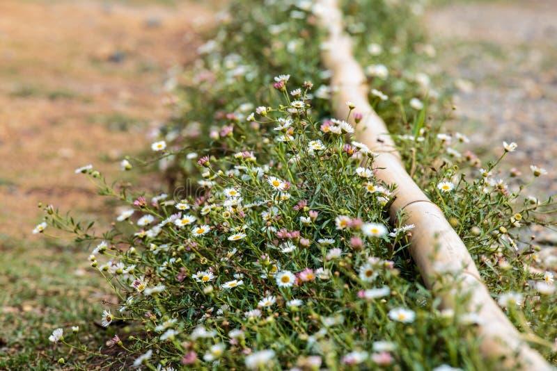 白花的领域沿路旁的 免版税库存照片