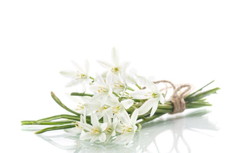 白花美丽的花束  图库摄影
