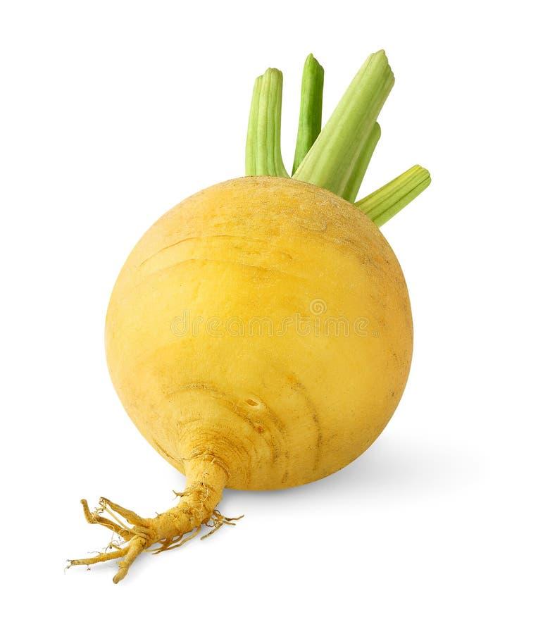 白萝卜 库存图片