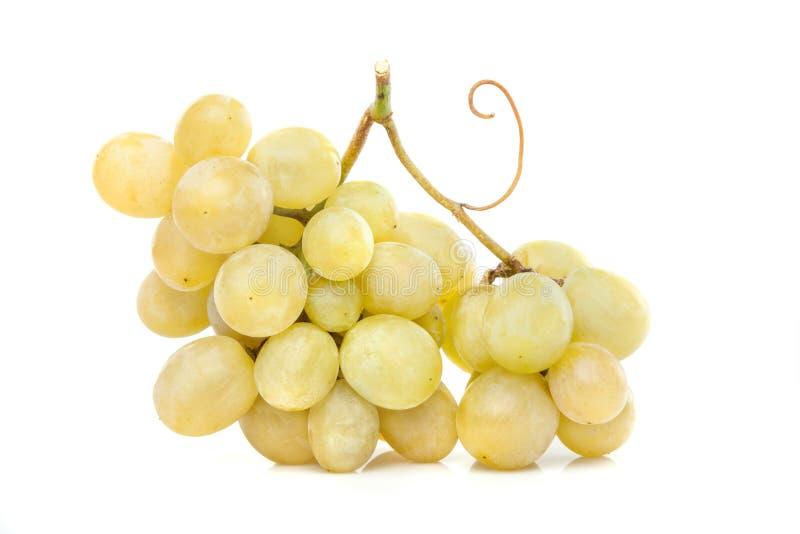 白葡萄群 免版税库存照片