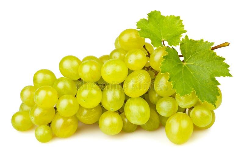 白葡萄 库存图片. 图片 包括有 新鲜, 果子, 收获, 问题的, 没人, 发狂, 点心, 葡萄, 有机 ...