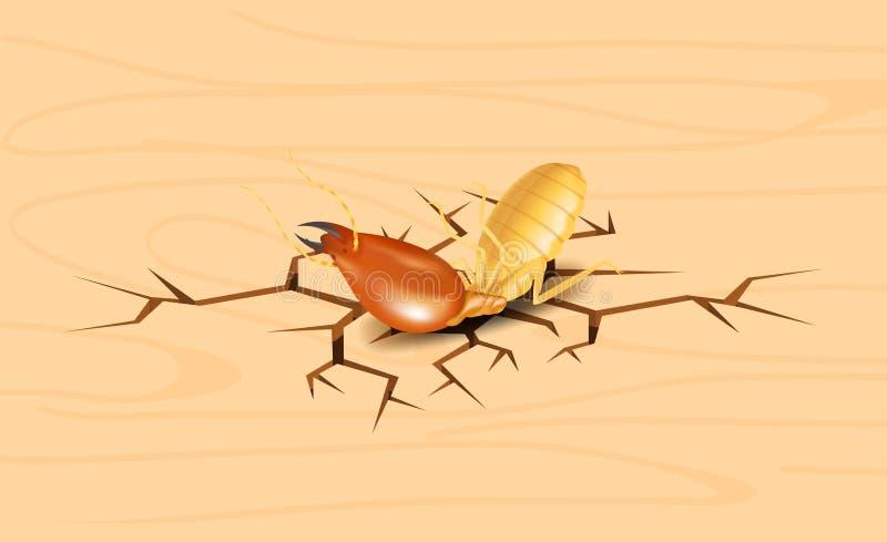 白蚁、死的白蚁在裂缝木背景,死的白蚁在木纹理与破坏和损伤概念,白蚁 向量例证