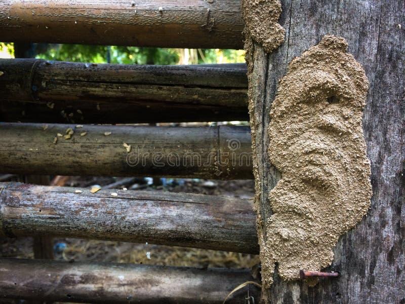 白蚁巢和竹子piil 免版税图库摄影