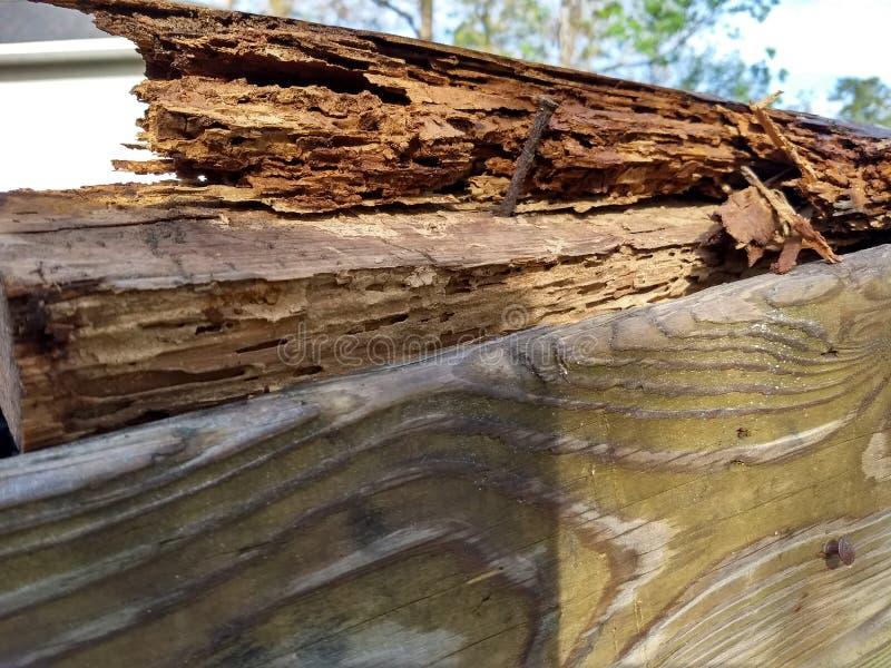 白蚁损坏的木材 免版税库存图片