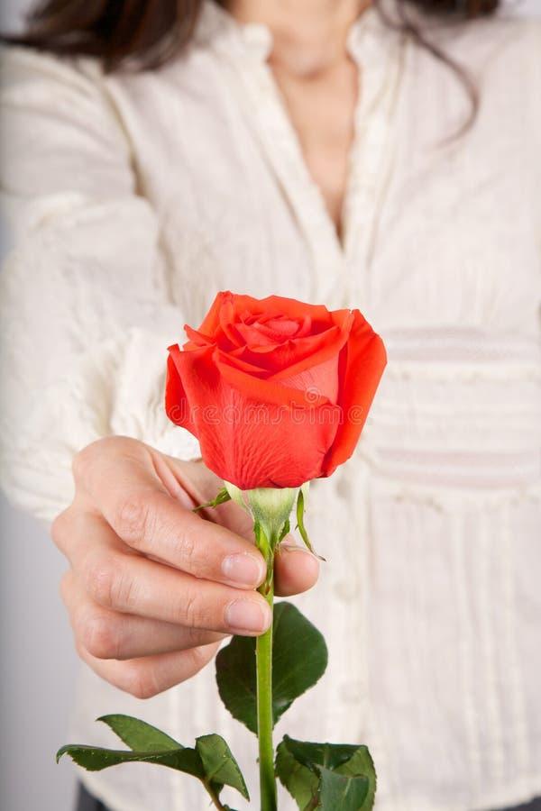 白衬衣妇女提供的红色玫瑰 免版税库存照片