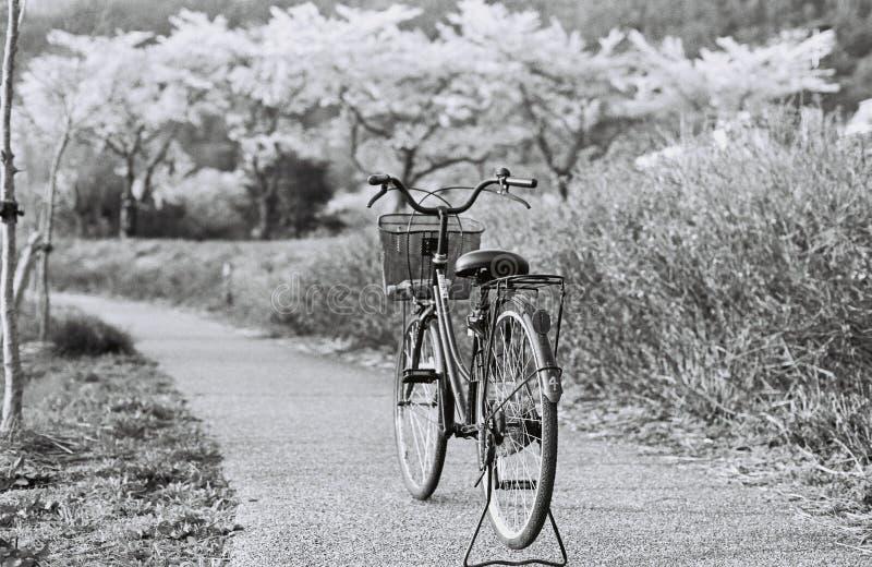 黑白车手 免版税库存照片