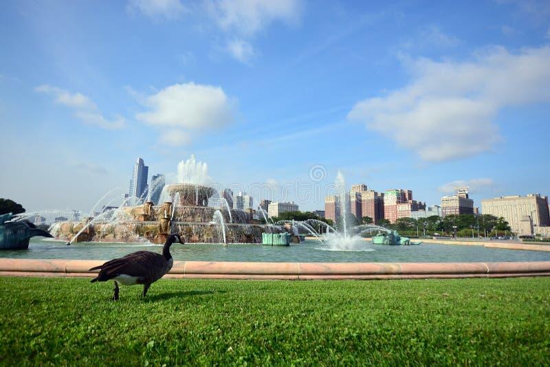 白金汉喷泉格兰特公园芝加哥,美国 库存图片