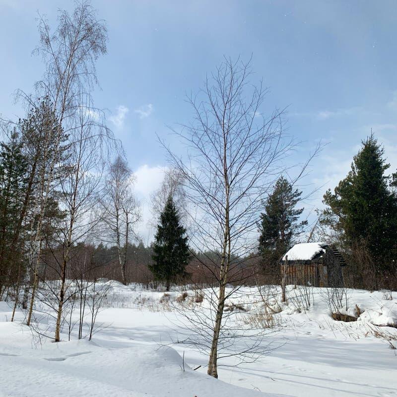 白雪覆盖的俄罗斯冬季森林 免版税图库摄影