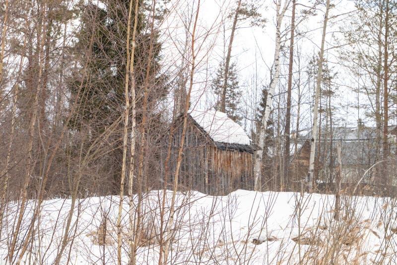 白雪覆盖的俄罗斯冬季森林 图库摄影
