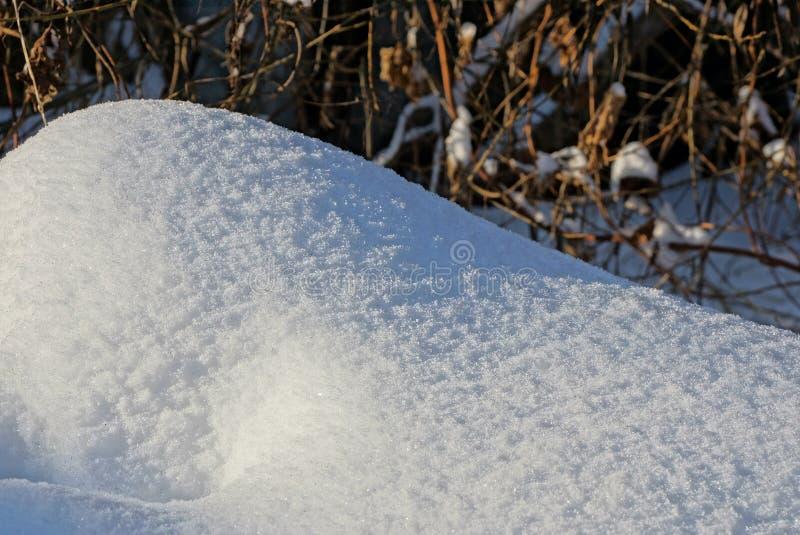 白雪随风飘飞的雪和植物棕色干燥分支在白天阳光下  图库摄影