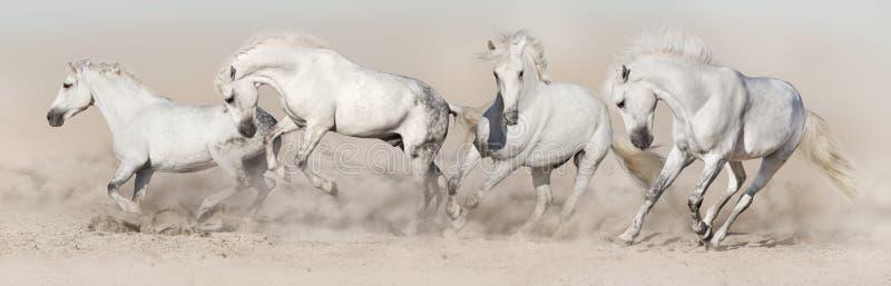 白马牧群奔跑 免版税库存照片