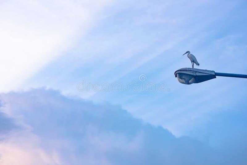 白鹭在街灯的鸟立场有云彩和阳光的 免版税库存图片