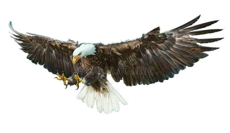 白头鹰飞过的传染媒介 库存例证