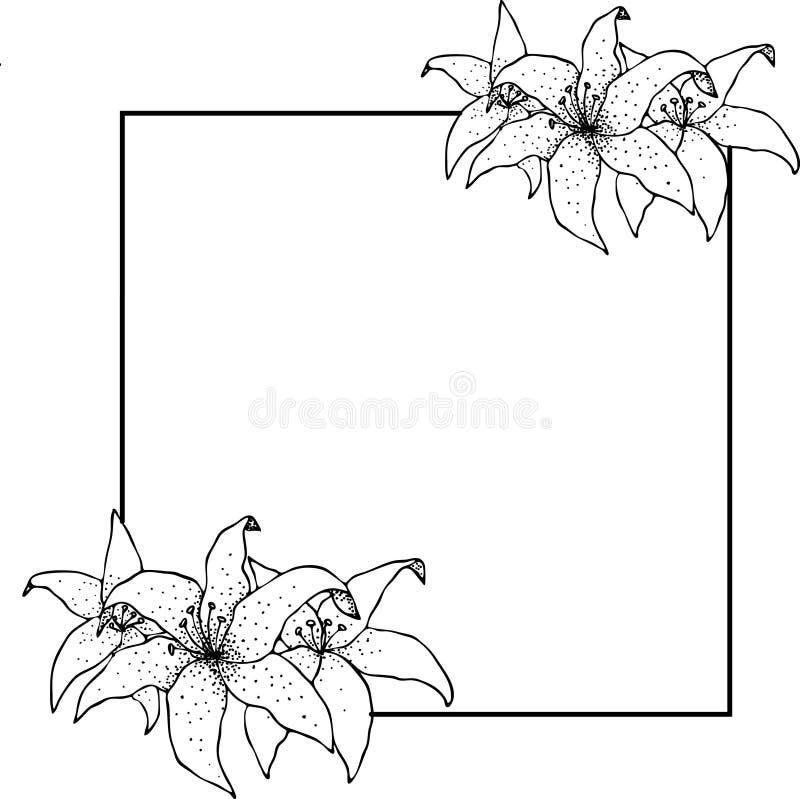 百合框架,花画和剪影与线艺术在白色背景 库存例证