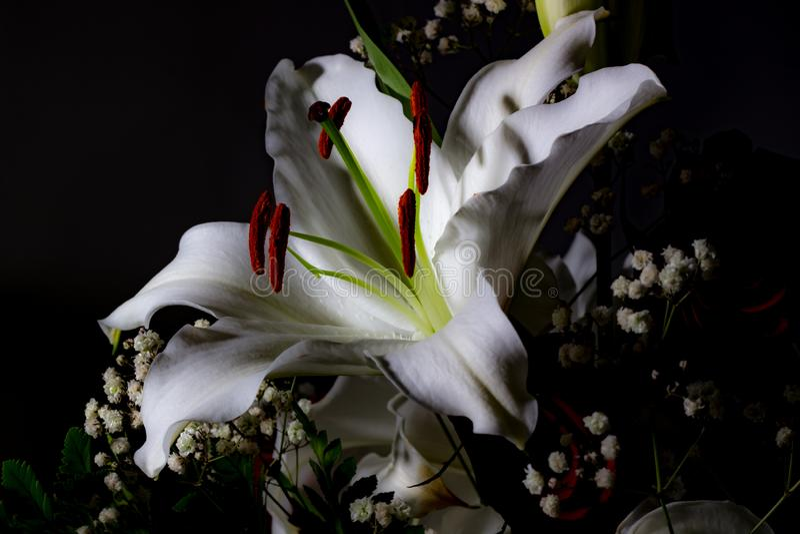 百合欢乐花束在红色和白色颜色的 库存图片