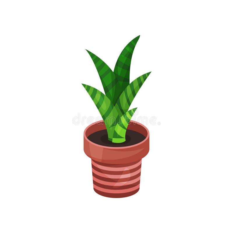 百合科植物绿色室内植物,盆的植物传染媒介例证 向量例证
