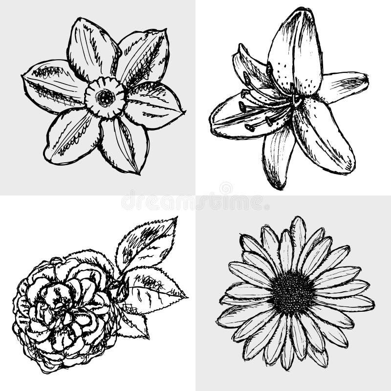 百合,雏菊和上升了,水仙剪影,无缝的样式 库存例证