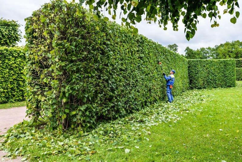 的专业花匠与飞剪机的一致的裁减灌木 修剪庭院,树篱 工作者饰物和使绿色灌木环境美化 库存图片