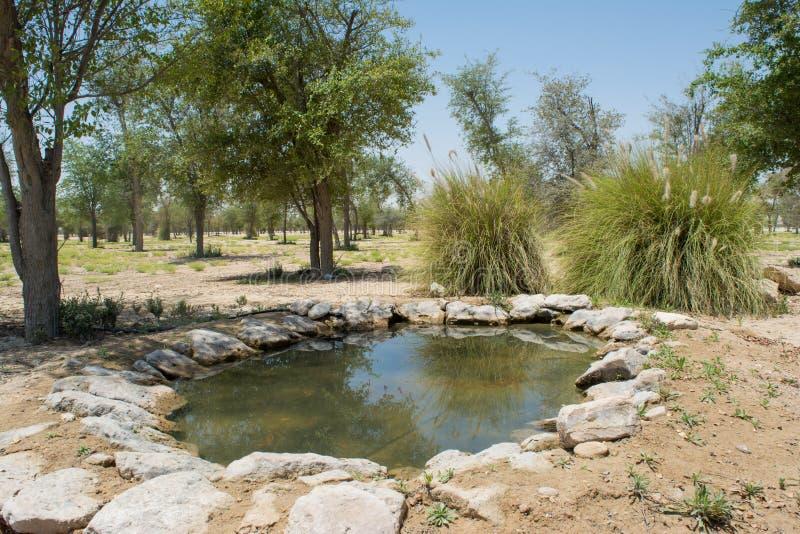 绿洲的人为小湖在树和灌木包围的沙漠 免版税图库摄影