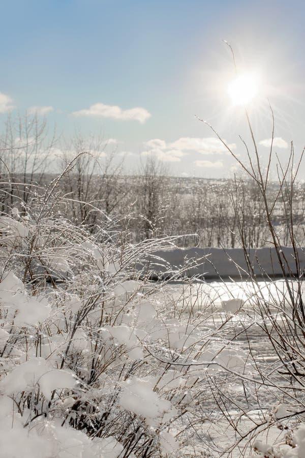 冻结的分支在冬天 库存图片