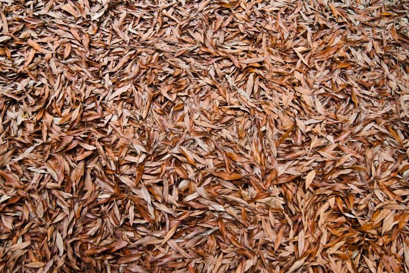 死的叶子背景 图库摄影
