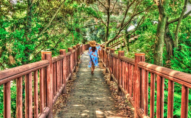 的女性游人走在道路的后面观点在森林里 免版税库存照片