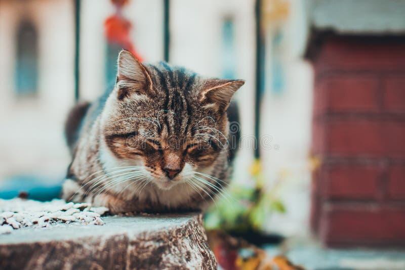 的布朗和睡觉白色逗人喜爱的猫户外 库存图片