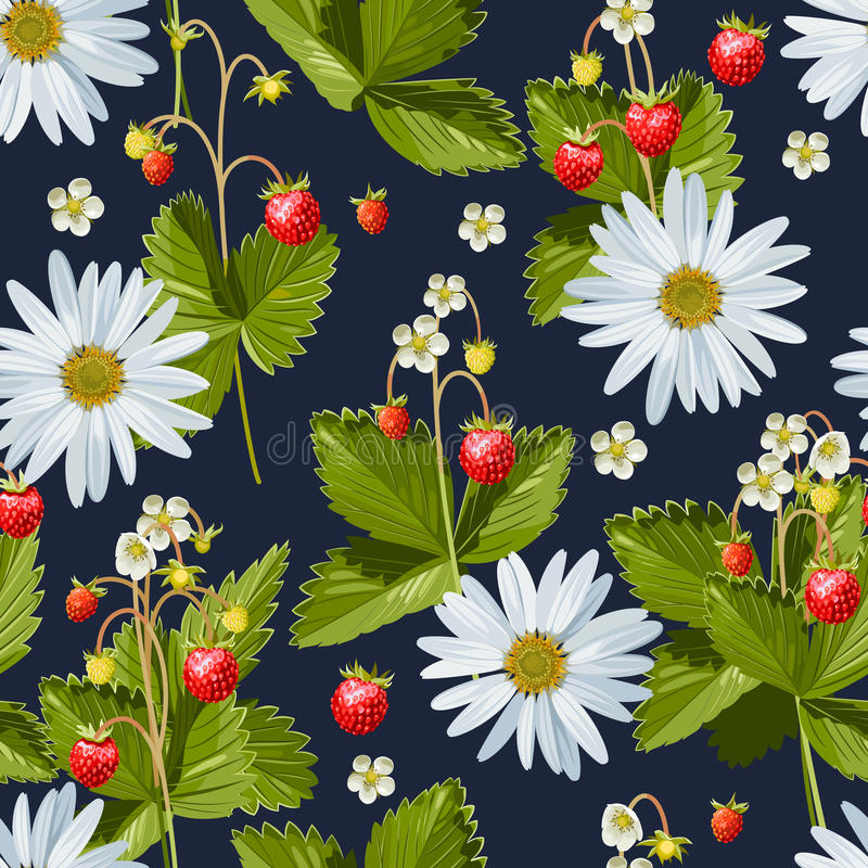 的春黄菊和无缝的野草莓 库存例证