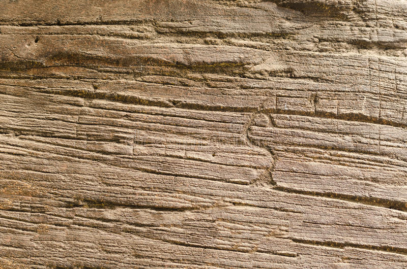 死的木纹理 免版税库存图片