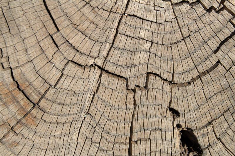 死的杉树树干 免版税图库摄影