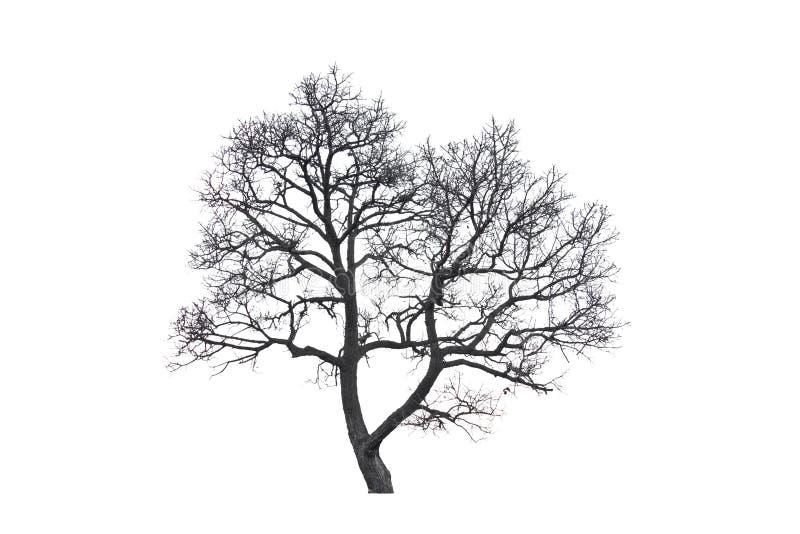 死的树。 免版税库存图片