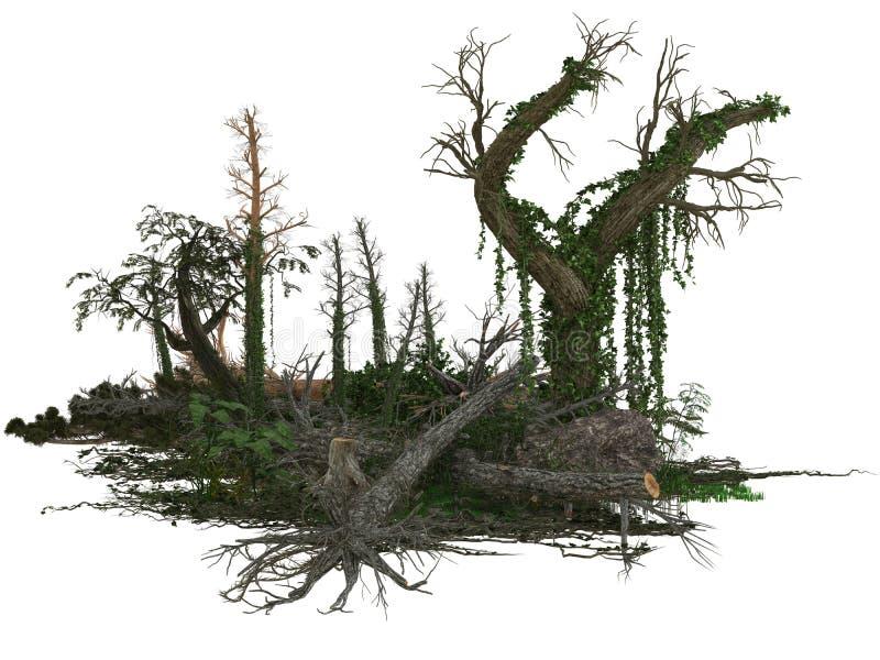 死的树和植物 免版税库存图片