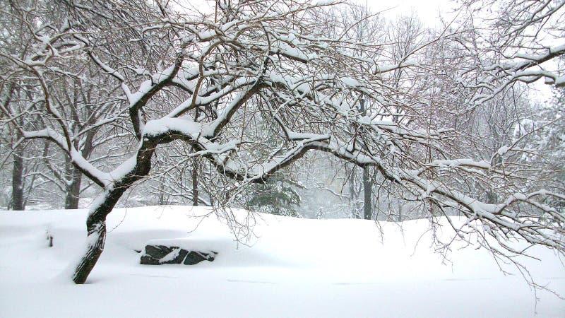 死的树在中央公园纽约 库存照片