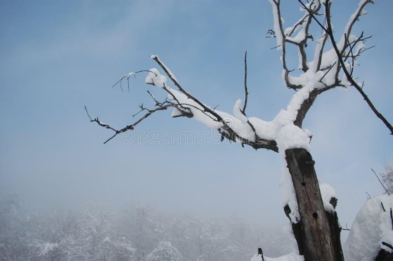 死的树在冬天 免版税库存照片