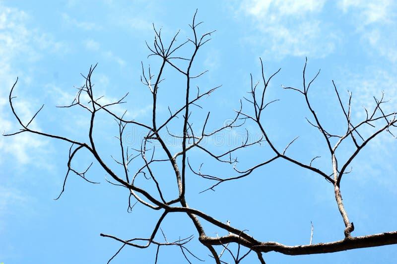 死的树在干净的蓝天下 库存图片