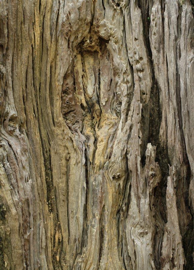 死的树干纹理 库存图片