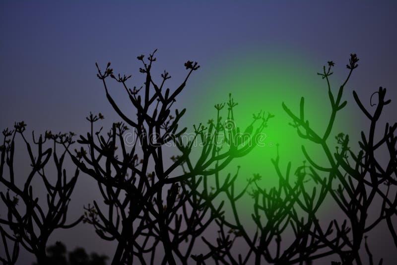 死的树或四季不断的树死了与东部天际 库存图片