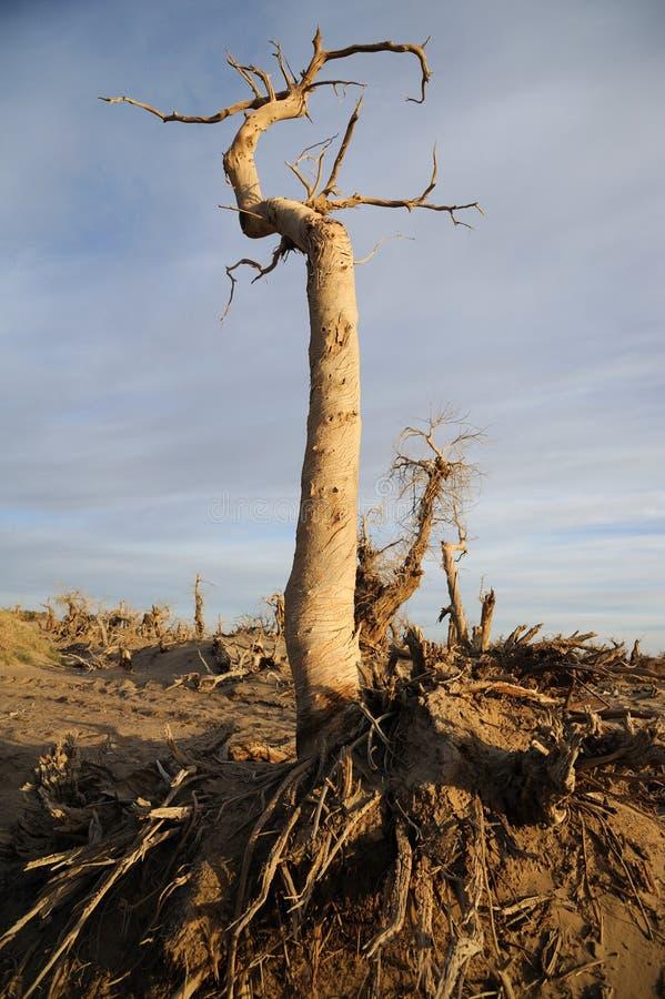 死的树 库存照片