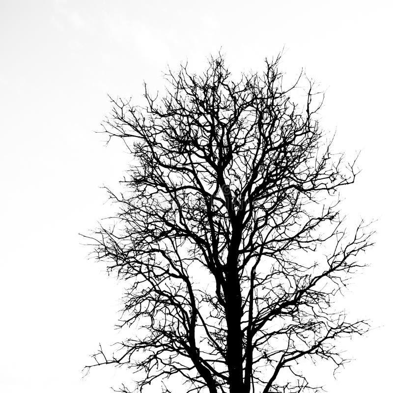 死的树 库存图片