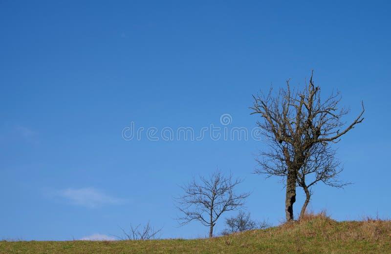 死的树 免版税库存图片