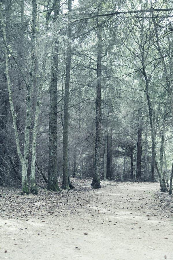 轻的森林 免版税库存图片